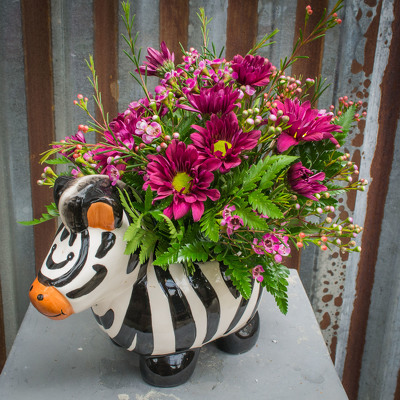 Baby Zebra from Marion Flower Shop in Marion, OH