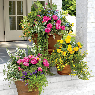 Outdoor Combo Pots - Various Sizes